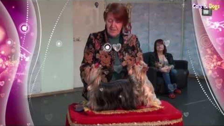 Cats&DogsTV - УДИВИТЕЛЬНЫЙ МИР СОБАК - СОБАКИ ПОРОДЫ ЙОРКШИРСКИЙ ТЕРЬЕР / YORKSHIRE TERRIER