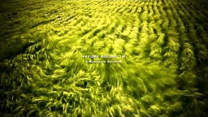 Nature Sound 19 - STREAM SOUND / THE MOST RELAXING SOUNDS -