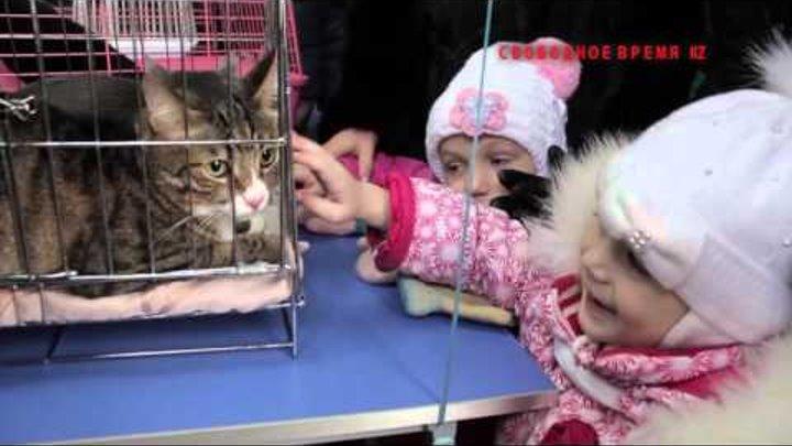 Выставка-ярмарка бездомных котят и щенят в Караганде