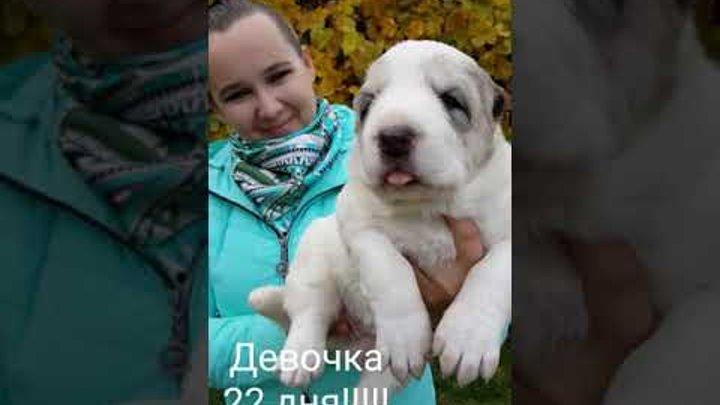 Дочь Гиганта Джафара и Пайри (внучки Бульдозера) 22 дня!!!! DAUGHTER of JAFAR AND PAYRI 22 DAYS!!!