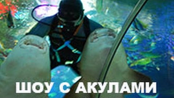 Шоу акул Дрессировка акул /Кормление акул в Океанариуме ТРК Планета Нептун СПб ВИДЕО Санкт-Петербург