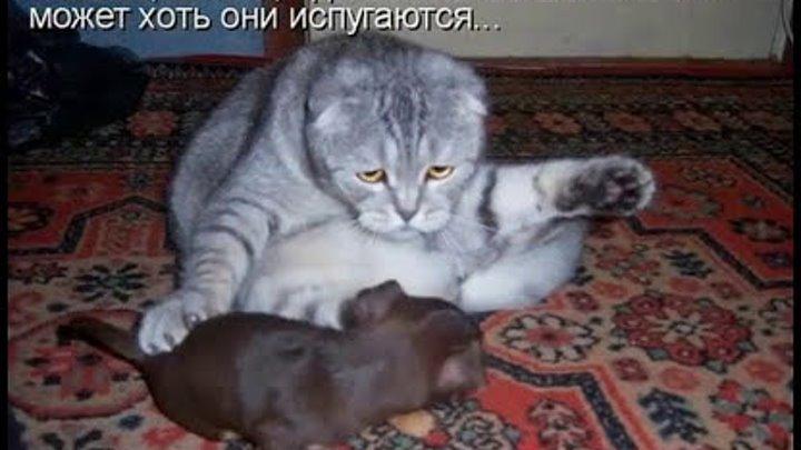 Котоматрица недели. Смешные кошки # Part 1 / Funny cats. Photo. the best