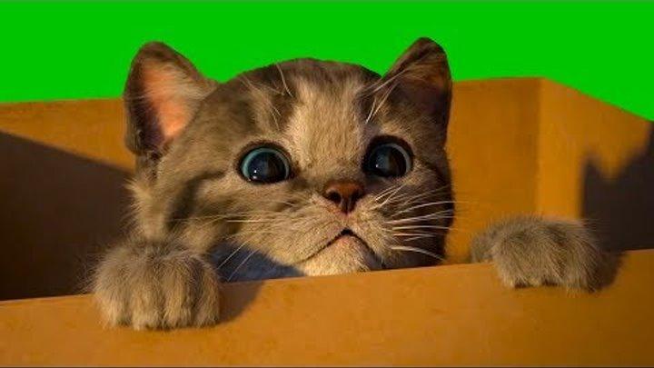Маленький КОТЕНОК СИМУЛЯТОР котика видео для детей как мультик виртуальный питомец #КИД #ПУРУМЧАТА