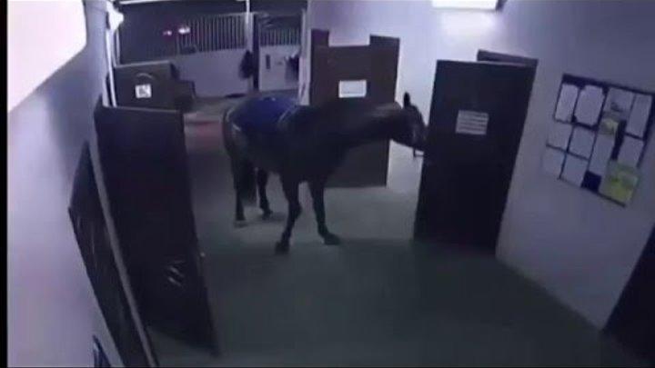Лошадь запилила дверь