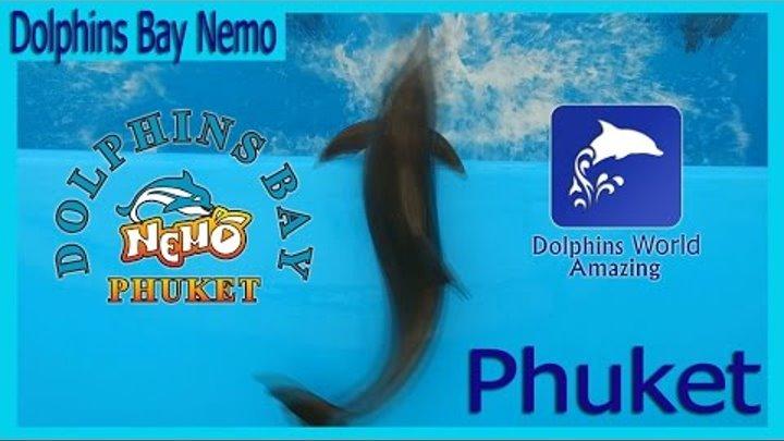Dolphinarium Nemo Phuket Dolphins Bay.Дельфинарий Пхукет