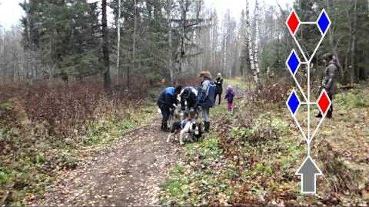 "Собачьи упряжки. Драйленд. ""Скифы Тур"". Карелия 2013. Sled dogs training (dryland). Karelia. Russia"