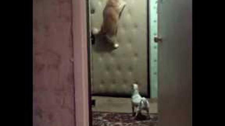 Кот ждёт хозяйку у двери и смотрит в дверной глазок