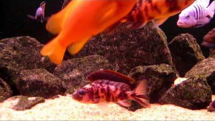 Интерактивный аквариумный туризм Сезон 3 Выпуск 11(Гость из первых 2х сезонов)