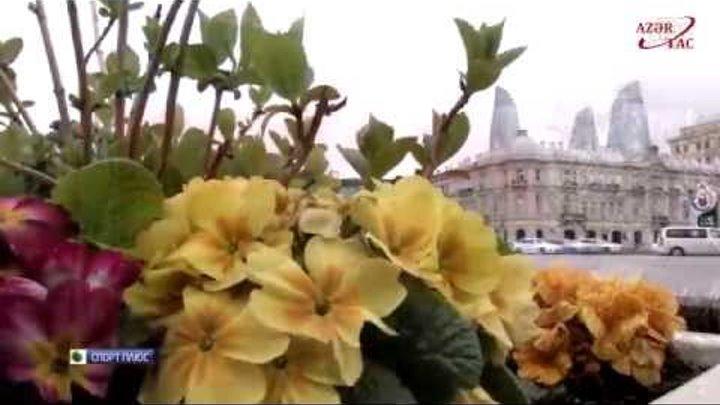 """Телеканал «НТВ Плюс» о Европейских играх """"Баку 2015"""""""
