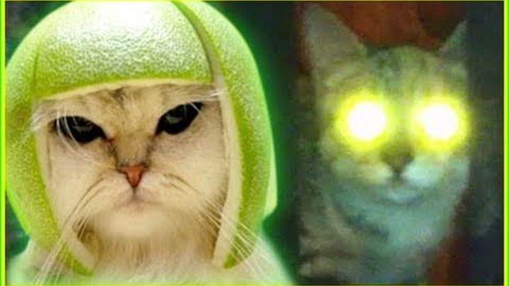 Lazer Cat Mocks You (We Don't Give A Frak)