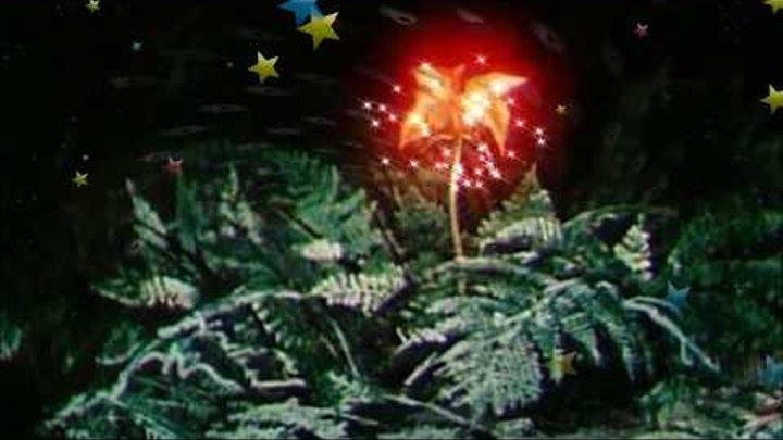 Папоротник цветок однажды ночью в Каролине - муз. Щербакова Вяч. Дмитр, исполняет группа STREET LIFE