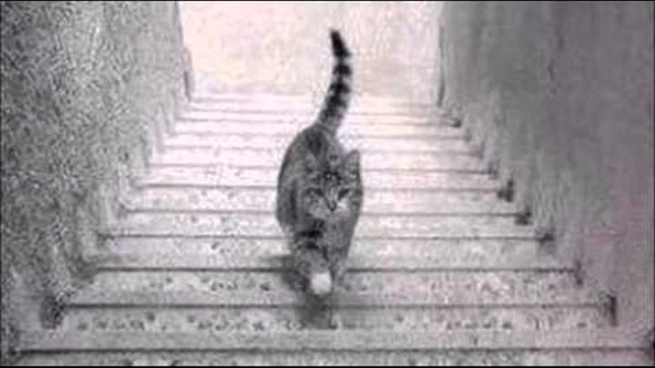 Cat on the stairs - up or down? Forget about the golden dress! Кот на лестнице - вверх или вниз?