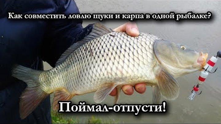 Как совместить ловлю щуки и карпа в одной рыбалке? Поймал-отпусти!