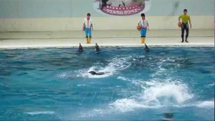 Шоу дельфинов в Sea Paradise