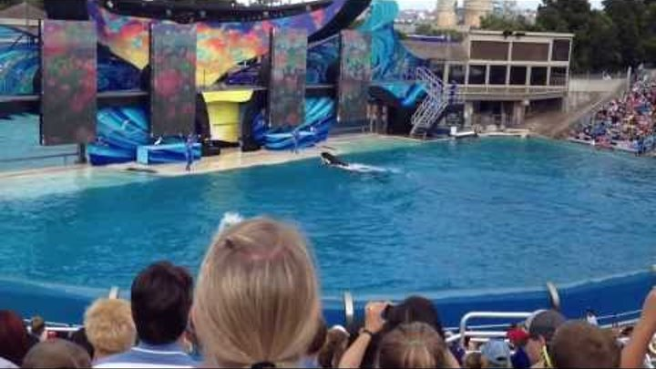 Канал Мисс Кейти Miss Katy все серии подряд Dolphins