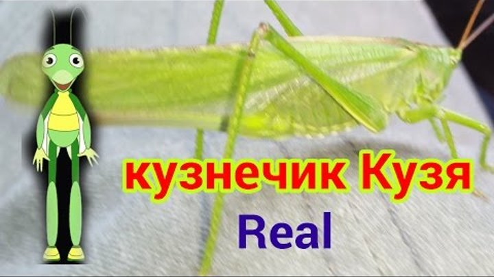 Кузнечик Кузя из Лунтика вживую HD #Grasshopper Kuzma of Luntik live