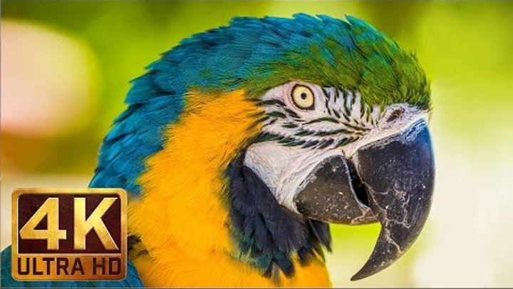 4K UHD Wild Animals - Nature Sounds, Relaxing Scenery - Trailer