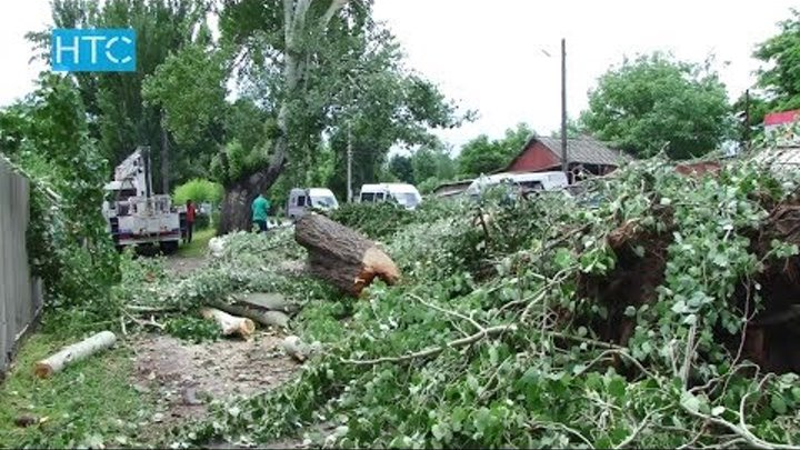 Вдоль трассы Бишкек – Кара-Балта спилят 3 тыс. карагачей / 13.06.17 / НТС