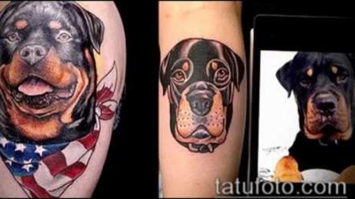 Значение тату ротвейлер - фото готовых татуировок