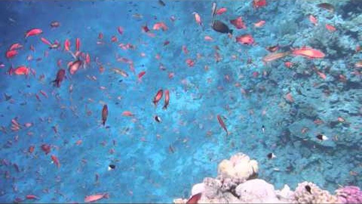 Над коралловым островом. Über der Koralleninsel..DSCF2355