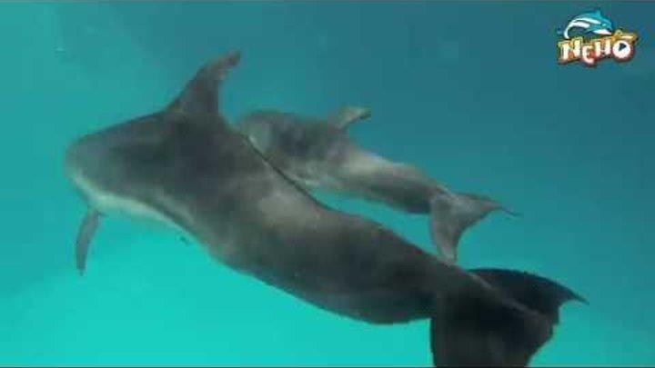 #Дельфиненок семь дней после рождения.