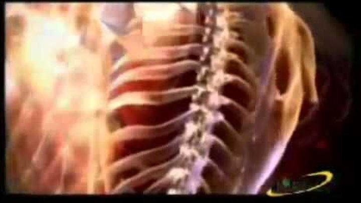 Стимулятор циркуляции энергии и крови Тяньши СЦЭК