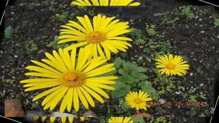 Воздух, солнце и цветы, до чего же классно
