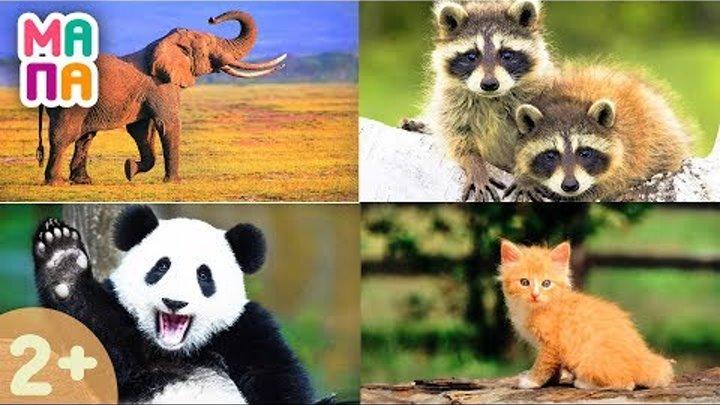 Развивающий мультик про животных | Викторина для самых маленьких | Учим слова | Карточки Домана
