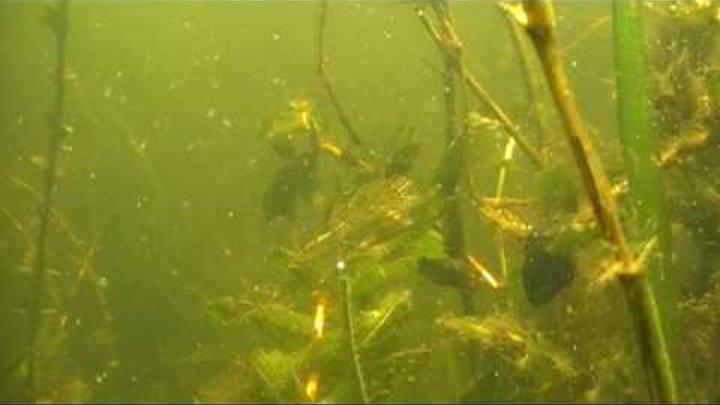 Подводный мир реки Днепр.