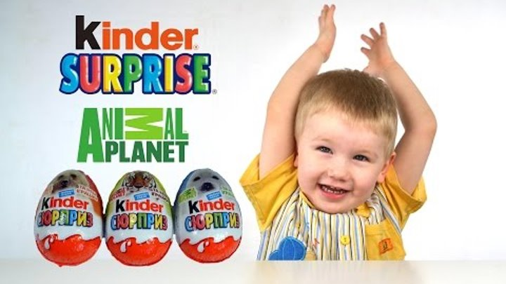 Киндер Сюрприз Энимал Пленет hd на русском обзор с Петей || animal planet Kinder Surprise VLOG