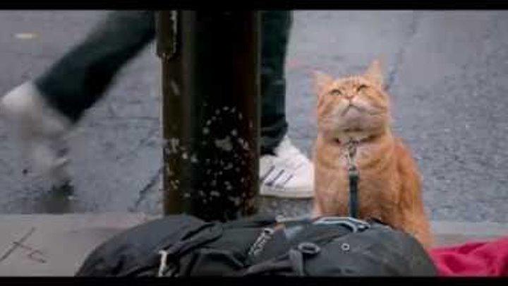 Уличный кот по имени Боб / A Street Cat Named Bob (2016) Трейлер HD