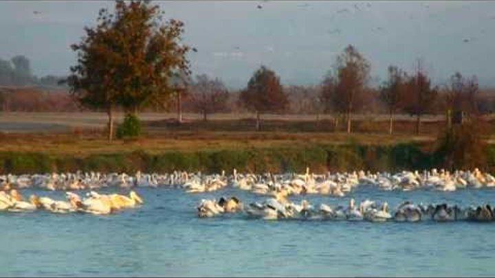 Birds. Sunrise-Восход солнца, перелетные птицы - אגמון החולה ,זריחה