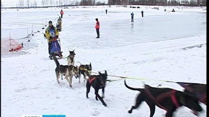 Гонка на собачьих упряжках «Калевала 2014». Старт