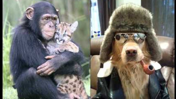 смешные ролики про животных, прикольное видео с животными.