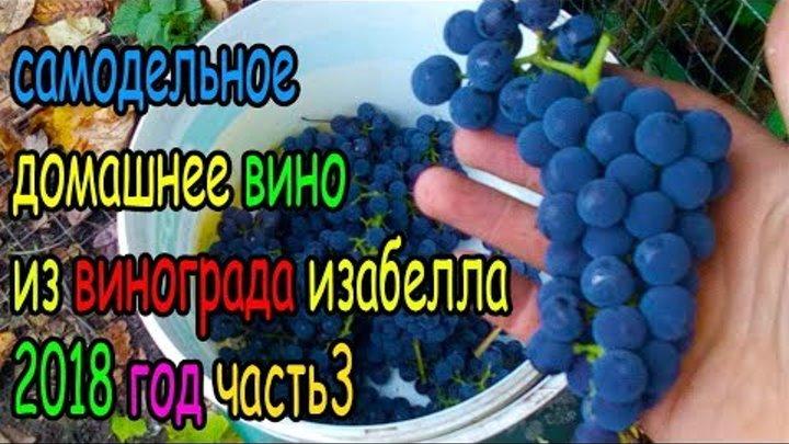 домашнее самодельное вино из винограда изабелла ч3