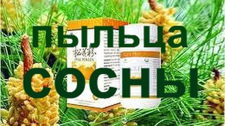 Новая Эра. Пыльца сосны и бамбук здоровья для сосудов мозга продукт № 1