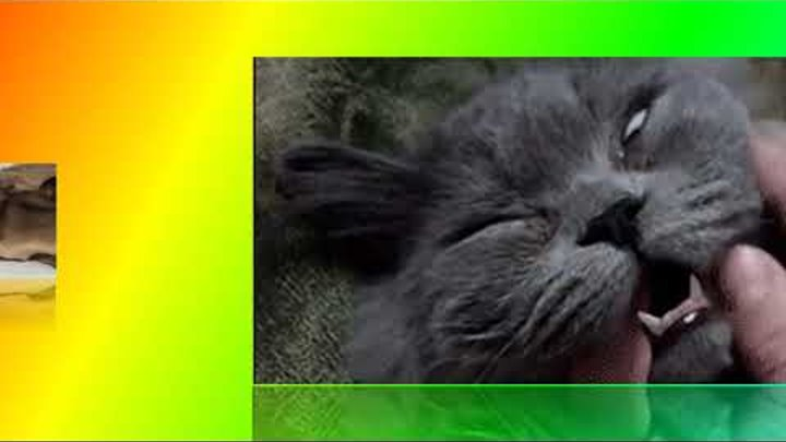 Кошки хотят спать- 2 Улыбнитесь!