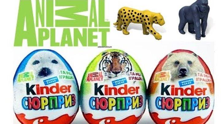 Киндер Сюрприз животные распаковка игрушек Kinder surprise animal planet