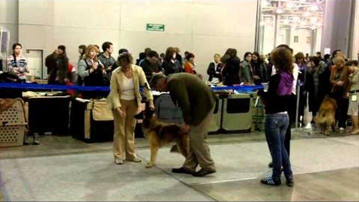 Выставка собак ЕВРАЗИЯ-2012 (часть 2)