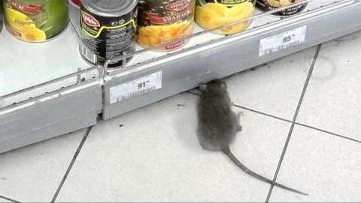 "Тюмень, ТРЦ ""Гудвин"", Гипермаркет «Карусель», крыса"