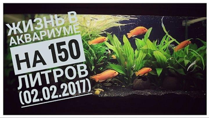 Аквариум на 150 сезон 1 серия 1 (02.02.2017)