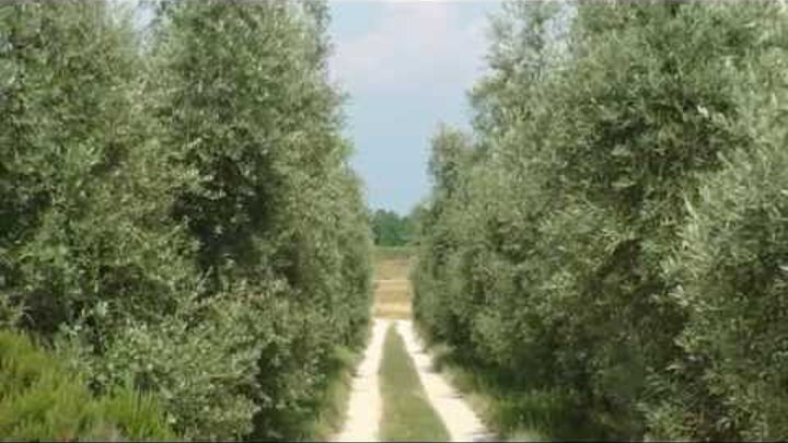 Lago di Garda Azienda Agricola