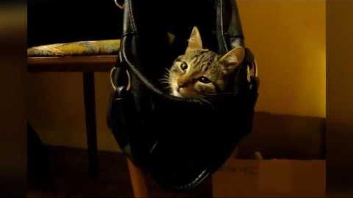 Спящие везде котики