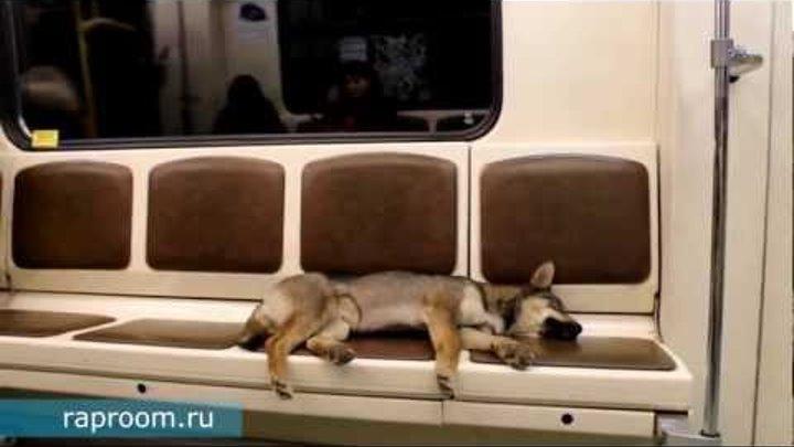 Собака улыбака в метро катака