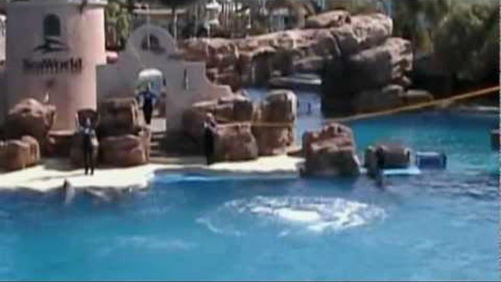 № 88. США. Калифорния. Сан Диего. Шоу дельфинов и китов.