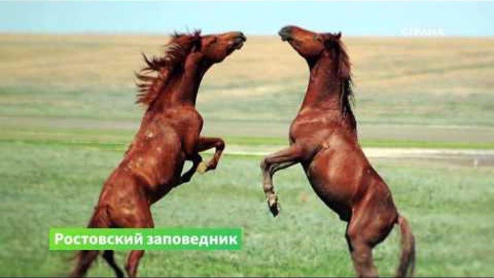 Природа. Ростовский заповедник