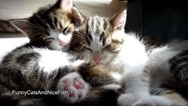 Смешные спящие котики
