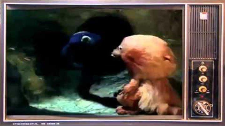 """Мультфильм """"Подземный переход"""". Лучшие мультипликационные и художественные фильмы!!!"""