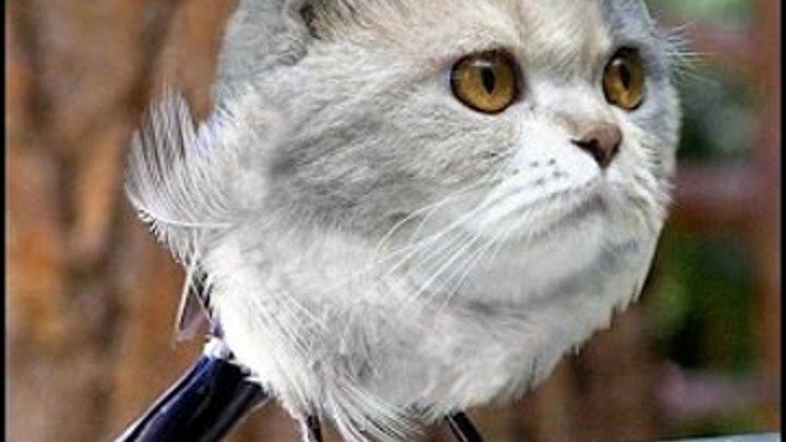 Кошки фотошоп. Смешные приколы про котов.