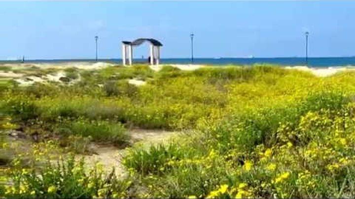 Голубое Небо,синее Море и жёлтые Цветы!!!Кирьят-Ям.Израиль.